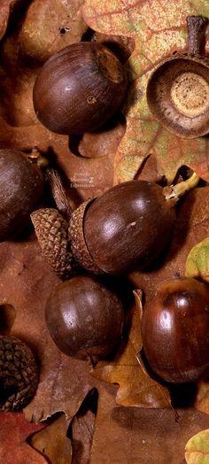 Autumn|Fall Brown