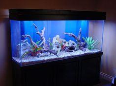 1000 images about 55 gallon fish tank remodel on for 55 gallon aquarium decoration ideas