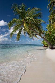 Palmera beach