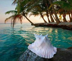 Hawaii and relax