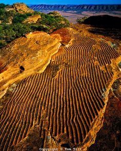 """Ripple Rock"" Pattern in Sandstone, Flinders Ranges National Park, South Australia"