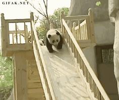 pandas playing - animated gif