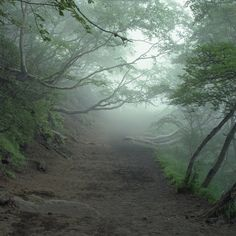 Suicide Forest, Aokigahara, Japan. Its so scary but beautiful at the same time