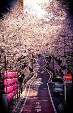 愛日本: Hanami in Tokyo.