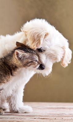480x800 Wallpaper puppy, kitten, friends, animals, caring, tenderness