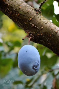 the fruit by crescenzov2 #nature #mothernature #travel #traveling #vacation #visiting #trip #holiday #tourism #tourist #photooftheday #amazing #picoftheday