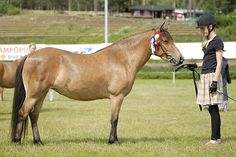 Gotland pony mare Ai.Ka. Elegia