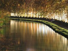 All Details You Need to Know About Home Decoration - Modern Le Canal Du Midi, Carpe Diem, Landscape Photography, Nature, Vineyard, Paradise, Corsica, Modern, Trees
