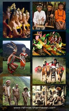 """minangkabau and bugis fundamental of culture Minangkabau, malay urang padang (""""people of the plains""""), largest ethnic group on the island of sumatra, indonesia, whose traditional homeland is the west-central highlands the minangkabau have extensive terraced fields and garden plots in which they raise irrigated rice, tobacco, and cinnamon, as well as fruits and vegetables."""