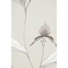White wallpaper with large illustrated orchid design in lemon yellow and grey. From Cole & Son. Several different colourways available. Dark Grey Wallpaper, Orchid Wallpaper, Yellow Orchid, Cole And Son, Grey And Gold, Lemon Yellow, Orchids, Floral, Illustration