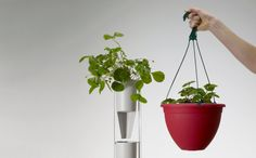 Hydroponic Planters by Windowfarms are a perfect way to grow your own vegetables in your small apartment! #urban #gardening #urbangardening
