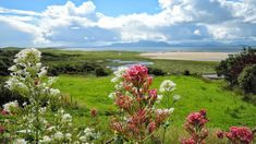 This summer discover the Great Western Greenway, the most popular traffic free route in Mayo. Traversing woodlands and hills it offers some of the most idyllic scenery in the west of Ireland. #mayo #ireland #nature