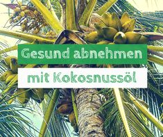 Mit Kokosnussöl abnehmen, geht das? via @ab_heute_gesund