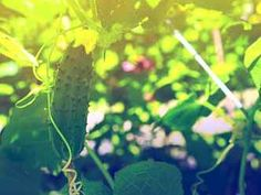 Plant Leaves, Plants, Gardening, Lawn And Garden, Plant, Planets, Horticulture