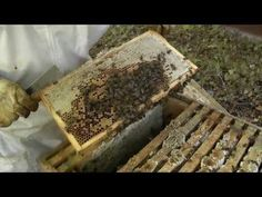 Beekeeping - How to make lots more Bees - Using the Rose Hive Method - YouTube