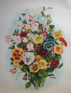 1900 Античная викторианской Анютины глазки Цветы Салон печати