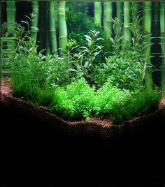 Nano aquascape © George W. Just