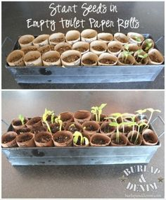 Paper Roll Seed Starters Get your garden started -- plant seeds in empty toilet rolls.Get your garden started -- plant seeds in empty toilet rolls. Garden Seeds, Planting Seeds, Planting Vegetables, Vegetable Gardening, Planting Flowers, Organic Gardening, Gardening Tips, Gardening From Seeds, Gemüseanbau In Kübeln