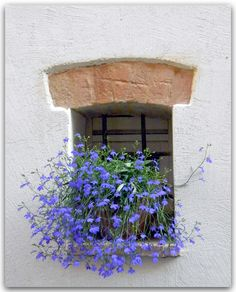 Summery Window - Marche Region of Italy