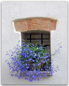 gyclli: Italy. Summery Window / By njk1951 | La vie en rose