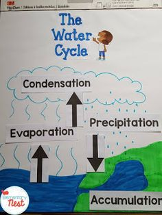 FREE water cycle labels- Water Cycle Activities and Lesson ideas with a FREEBIE- science activities for water cycle in the primary classroom- reading, writing, research, and science experiments.