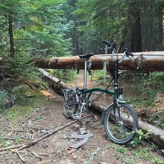 Wrong trail. Can't remember how many fallen trees I went over and under before I turned back. #championlakes #bromptongrinding #singletrack #brompton #myBrompton   Flickr - Photo Sharing!
