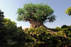 The Tree of Life at Disney's Animal Kingdom - Animal Kingdom's 15th anniversary.   #disney #animalkingdom