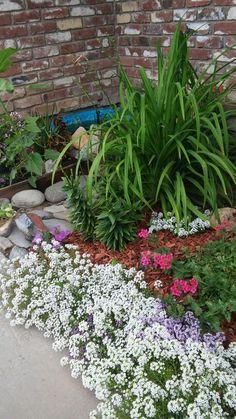 My garden Platform Bed, Garden, Plants, How To Make, Garten, Elevated Bed, Gardens, Planters, Tuin