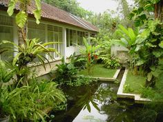 Ein wilder Garten mit Teich und tropischen Pflanzen