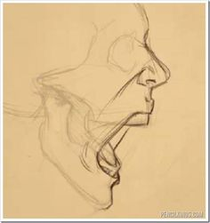 How to draw an open mouth from the side - with Sycra Yasin