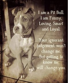 Uplifting So You Want A American Pit Bull Terrier Ideas. Fabulous So You Want A American Pit Bull Terrier Ideas. Pitbull Terrier, Terrier Mix, Bull Terriers, Beautiful Dogs, Animals Beautiful, Amazing Dogs, Adorable Animals, I Love Dogs, Cute Dogs