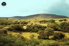 El Parque Nacional de Cabañeros.  Situado en el extremo occidental de Castilla la Mancha ocupando una amplia superficie de los Montes  de Toledo. Su paisaje está formado por extensas dehesas o rañas con ricos pastos estacionales que ofrecen alimento a multitud de animales. Crecen gran variedad de árboles y arbustos propios del bosque mediterráneo