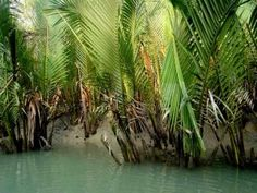 The flora of the world & the great one Sundarbans-Bangladesh