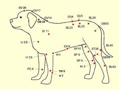 Locate Acupressure Points on Your Pet. Learn how to enhance your pets life with Acupressure! Anxiety, back problems are more are addressed. Acupuncture Points Chart, Acupressure Points, Acupressure Therapy, Reiki, Acupressure Treatment, Dog Anxiety, Muscle Spasms, Veterinary Medicine, Pet Life