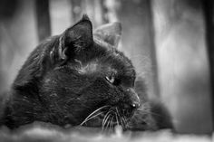 Black Cat Photo by Nikhil (Mace) — National Geographic Your Shot