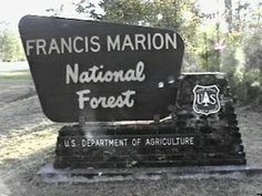 Francis Marion National Forest, South Carolina