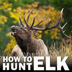 Lessons from Experienced Elk Hunters – 5 Things Rookie Hunters Need to Know