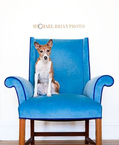 dog on blue chair
