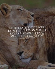 No matter how tough it gets, never forget those who didn't give up on you. Leo Quotes, Wolf Quotes, Life Quotes Love, Badass Quotes, Animal Quotes, Inspiring Quotes About Life, Wisdom Quotes, True Quotes, Inspirational Quotes