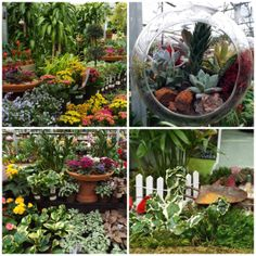 Our houseplant greenhouse in our Freehold location is bursting with color!