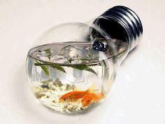 Lightbulb Aquarium for your desk! Stress relief.