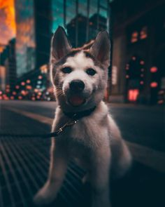 Moody Street and Urban Photography by Yeshi Kangrang – – Matthew - Baby Animals Cute Funny Animals, Cute Baby Animals, Animals And Pets, Funny Cats, Cute Puppies, Cute Dogs, Dogs And Puppies, Doggies, Urban Photography