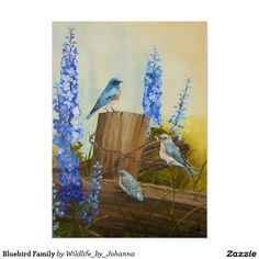 "Bluebird Family Poster. Your choice of paper or canvas. Designed from my original oil painting ""Bluebird Family And Delphiniums"" by Johanna Lerwick Wildlife/Nature Artist."