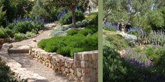 Mediterraner Garten auf Mallorca | Spanien | Stefanie Jühling - Landschaftsarchitektin