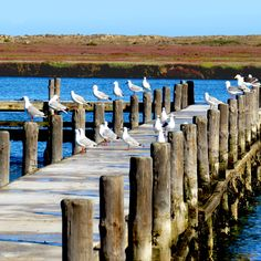 Rows of seagulls at Laaiplek, Velddrif — enjoying the best of the best West Coast, The Row, Cape, Good Things, Mantle, Cabo, Coats