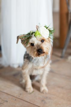 This puppy is WAY too cute! http://www.stylemepretty.com/wisconsin-weddings/2015/05/27/luxurious-boho-warehouse-wedding-inspiration/ | Photography: Maison Meredith - http://www.maisonmeredith.com/