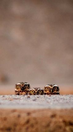 21 Greatest Owl Pictures You'll Ever See - - Nature Animals, Animals And Pets, Baby Animals, Funny Animals, Cute Animals, Beautiful Owl, Animals Beautiful, Owl Bird, Pet Birds