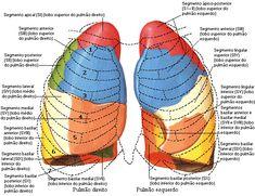 Aula de Anatomia   Sistema Respiratório