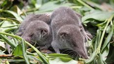 Strange and Unbelievable Facts About Shrews