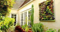 Plantas recomendadas para tu jardín vertical